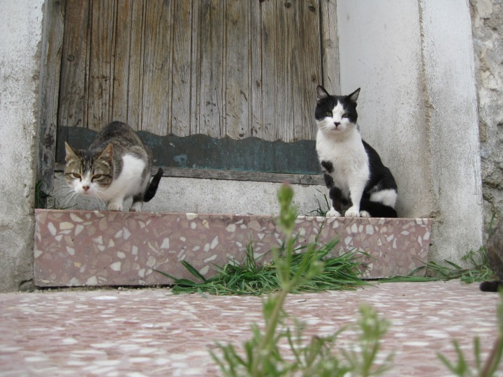Cats at Fuendetodos, Spain